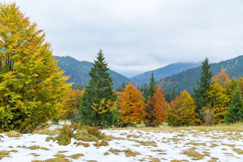 Bel automne, un paysage coloré de montagne avec les crêtes couronnées de neige et arbres jaunes photos stock