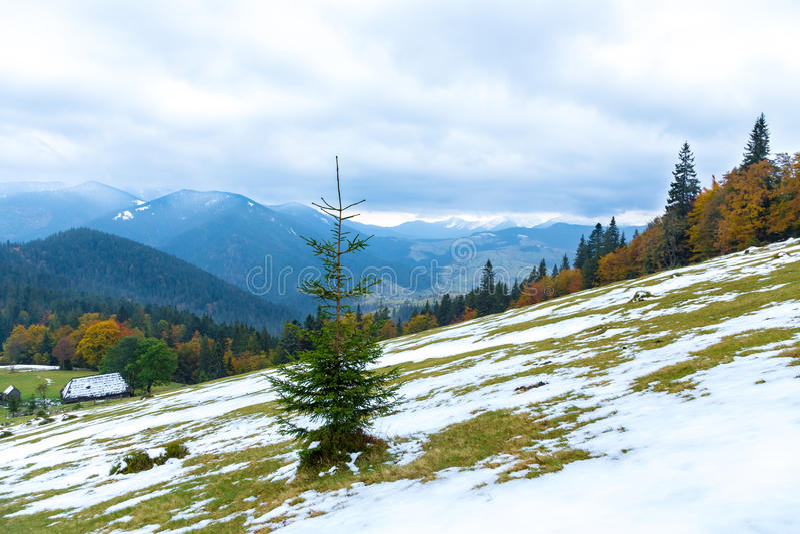 Bel automne, un paysage coloré de montagne avec les crêtes couronnées de neige et arbres jaunes images libres de droits