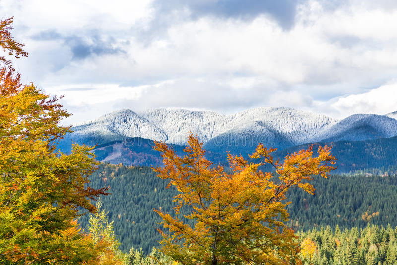 Bel automne, un paysage coloré de montagne avec les crêtes couronnées de neige et arbres jaunes image stock