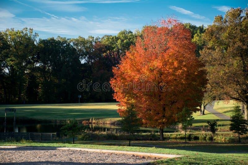 Bel Autumn Seasons, ciel bleu, froid et brise dehors photographie stock