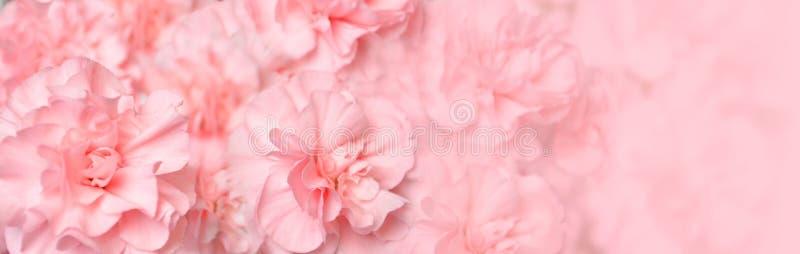 Bel en-tête rose de fleur d'oeillet images libres de droits