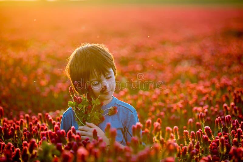 Bel enfant dans le domaine magnifique de trèfle incarnat sur le coucher du soleil, prise photos stock