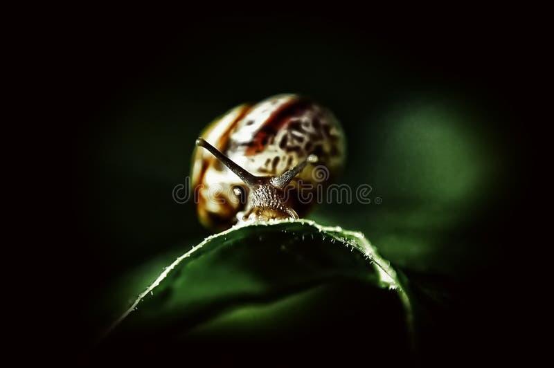 Bel escargot photo stock
