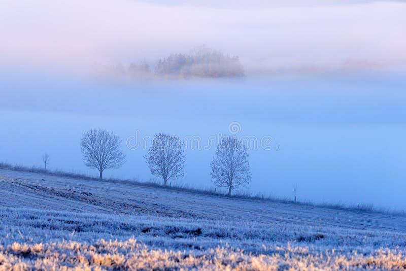Bel hiver dans le paysage Matin gelé brumeux dans les montagnes Arbre de montagne de Sumava, R?publique Tch?que paysage brumeux images libres de droits