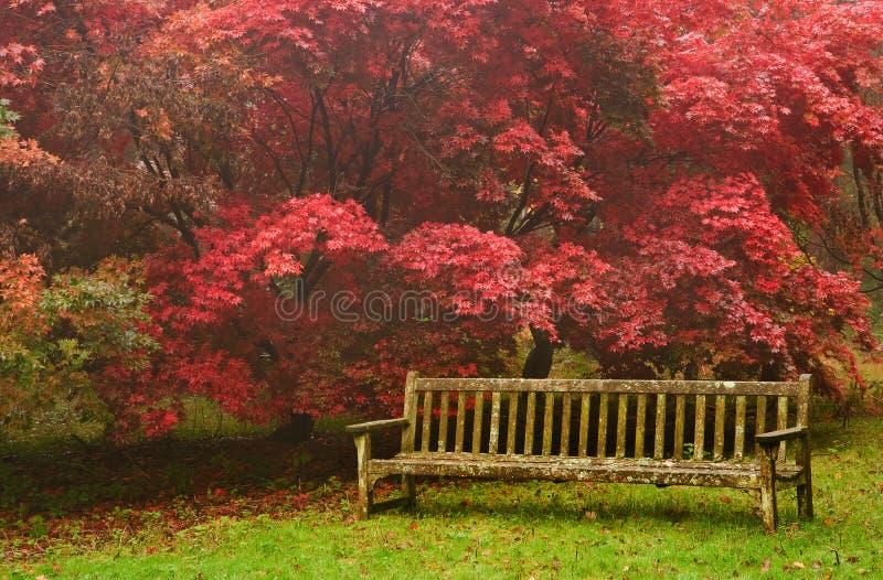 Bel horizontal d'image de nature d'automne d'automne image stock