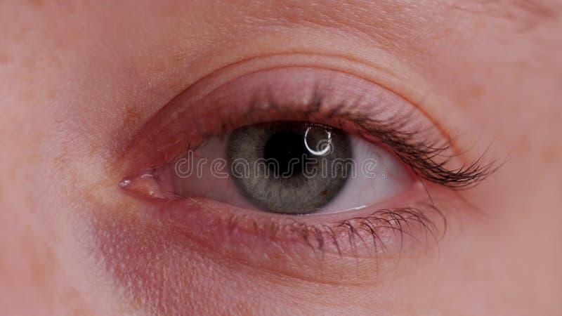 Bel oeil bleu en gros plan image libre de droits