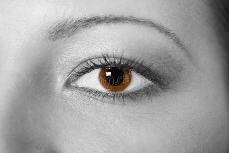 Bel oeil de femme images libres de droits