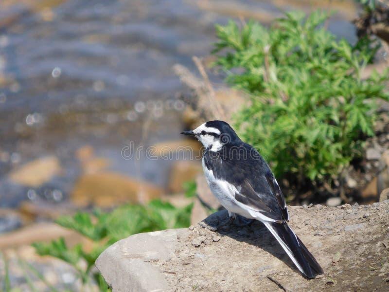 Bel oiseau image stock