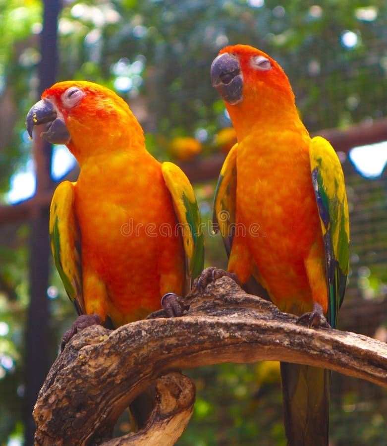 Bel oiseau coloré de perroquet et d'ara dans le zoo tropical de nature images stock