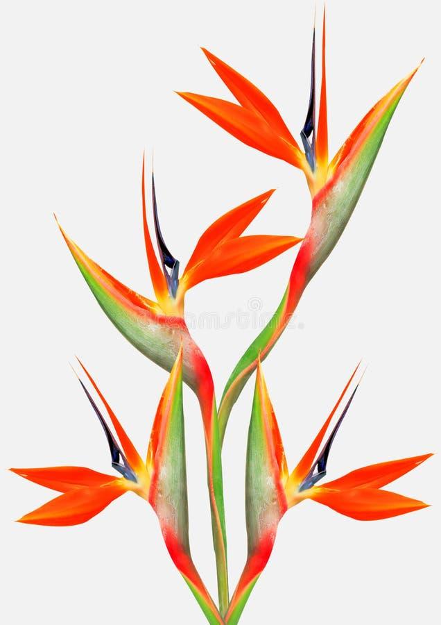 Bel oiseau lumineux de bouquet de paradis image stock for Bouquet de fleurs lumineux