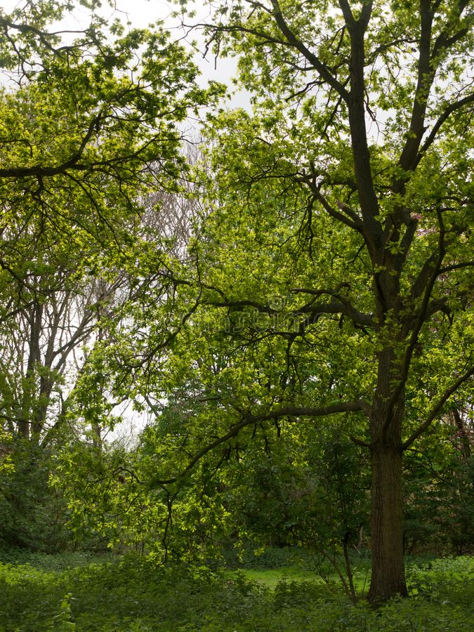 bela cena lá fora com árvores e céu imagem de stock