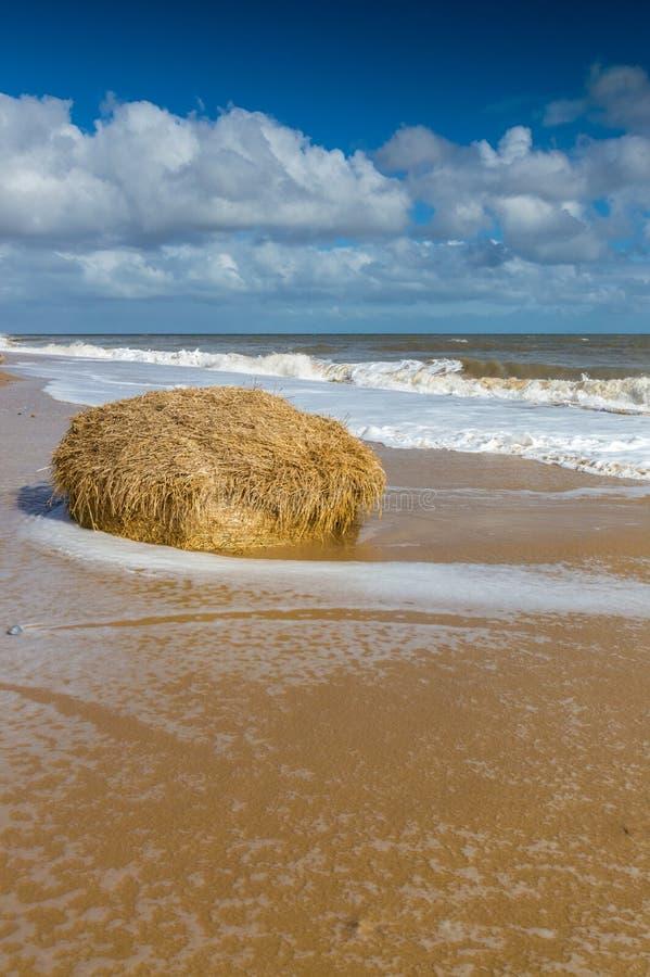 Bela na sianie na plaży przy Covehithe fotografia royalty free