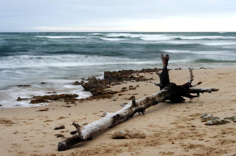 bela plażowa obraz royalty free