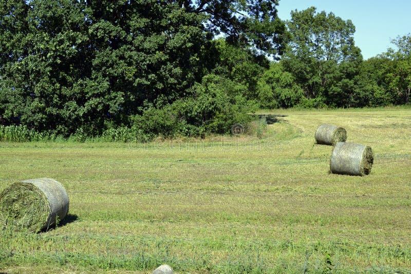 Bela siano na łąki polu blisko lasu obrazy stock