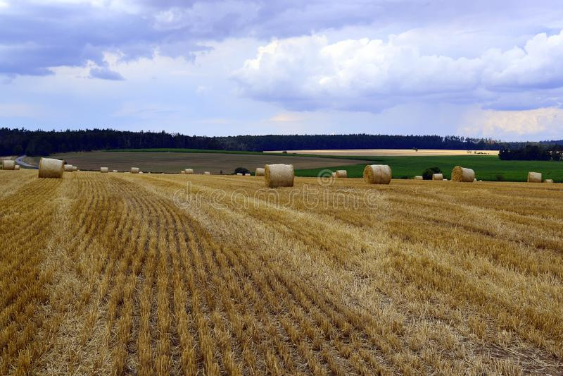 Bela siano na łąki polu na zboczu obraz stock