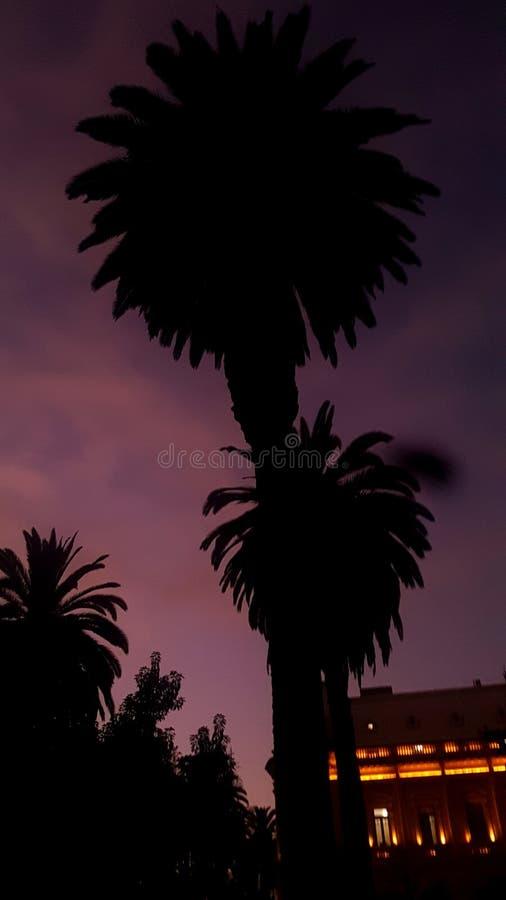 Belamente palmeira fotografia de stock