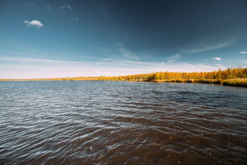 belarus Fiume di Autumn Landscape With Lake Pond e bello Bir fotografia stock libera da diritti