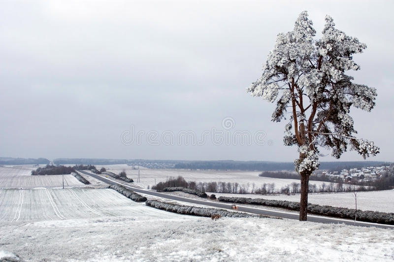 Belarus, paisaje del invierno fotografía de archivo