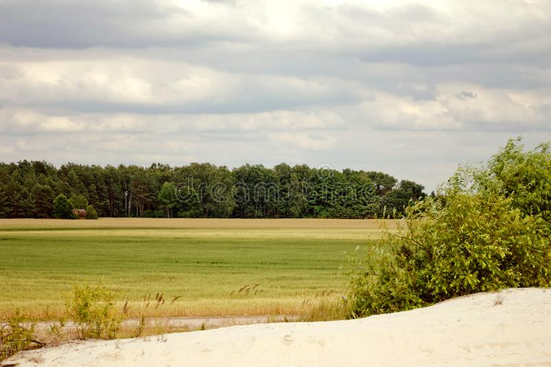 Belarus, The part of sandy beach, field and pine forest on background stock photography