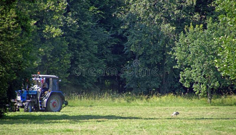 Belarusian krajobraz Rolny wyposażenie i bocian - śmieszny sąsiedztwo obraz stock