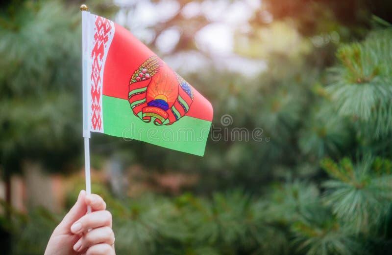 Belarussian flaga w ręka dniu niepodległości, Chorągwianego dnia pojęcie obraz royalty free
