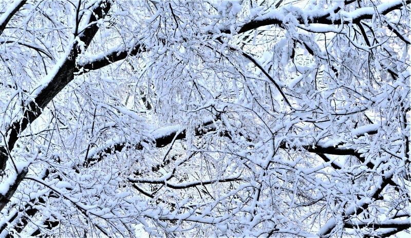 Belastete Äste drehen sich unten von spät noch Ostern-Schneefälle lizenzfreie stockbilder