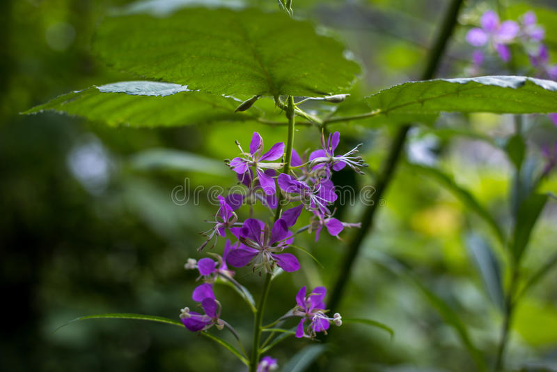 Belaubte Blume stockfotos