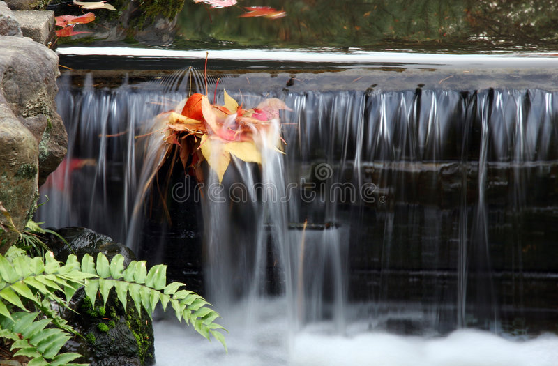 Download Belaubter Bach stockfoto. Bild von bewegen, wasser, bach - 48722