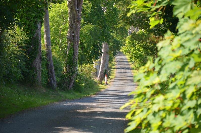 Belaubter Feldweg stockbild