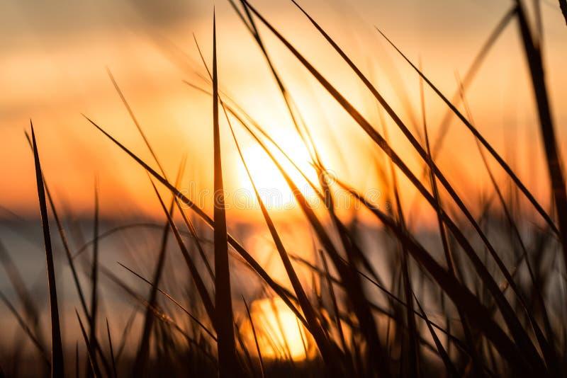 Download Belaubter Sonnenuntergang stockfoto. Bild von schön, heiß - 96934646