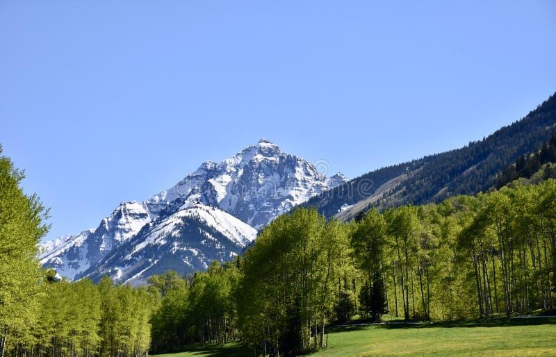 Belces marrón situadas en mayo en Colorado cerca de Aspen imagen de archivo