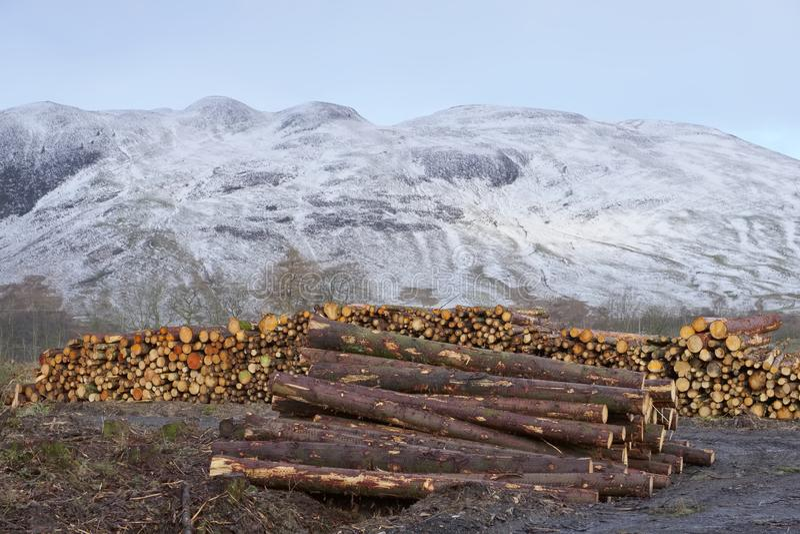 Bele brogować dla zimy energii paliwa przy śnieżnym sezonem w lesie i lasach drewno zdjęcie royalty free