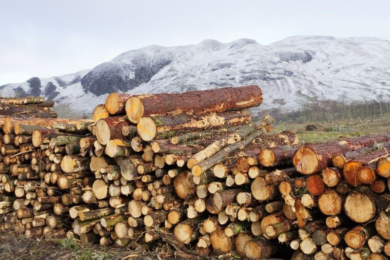 Bele brogować dla zimy energii paliwa przy śnieżnym sezonem w lesie i lasach drewno obrazy royalty free