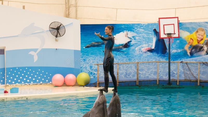 BELEK, TURKIJE - OKTOBER 04, 2014: De dolfijnen tonen, Troy Dolphinarium Twee bottlenosedolfijnen stock afbeeldingen