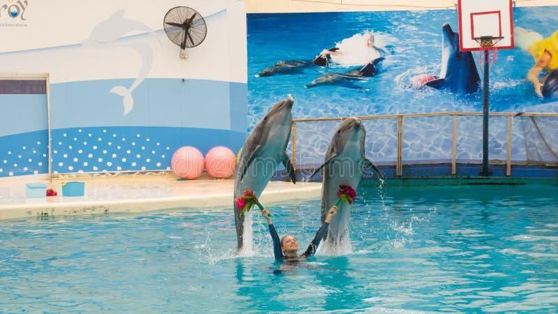 BELEK, TURKIJE - OKTOBER 04, 2014: De dolfijnen tonen, Troy Dolphinarium Twee bottlenosedolfijnen stock afbeelding