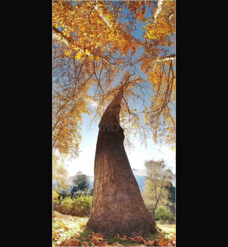 Belemedik Naturpark, Adana Türkei stockbild