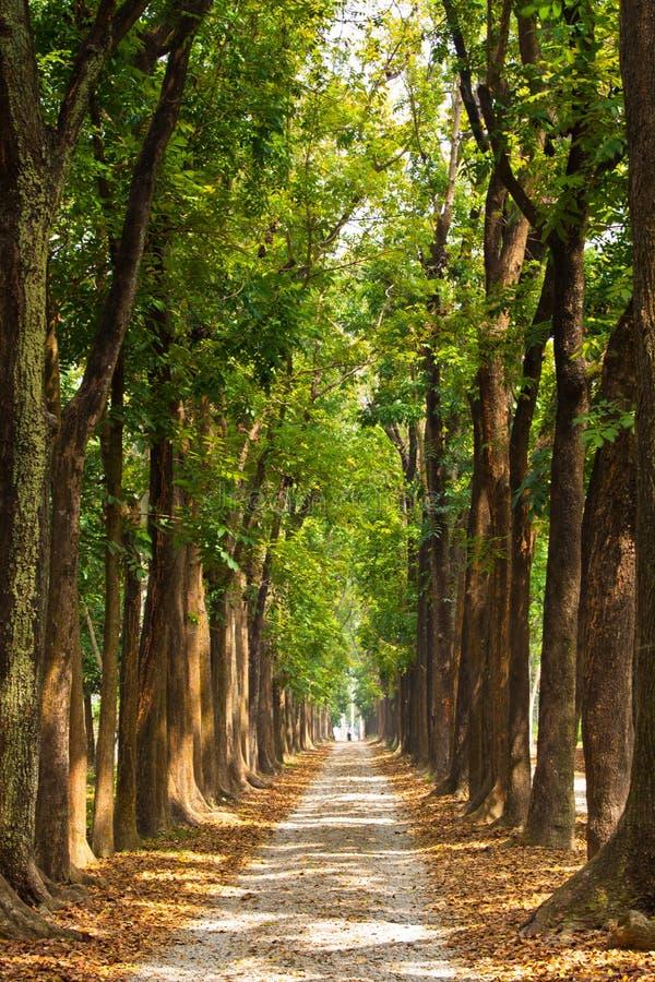 Beleuchtung-Baum-Spur lizenzfreies stockbild
