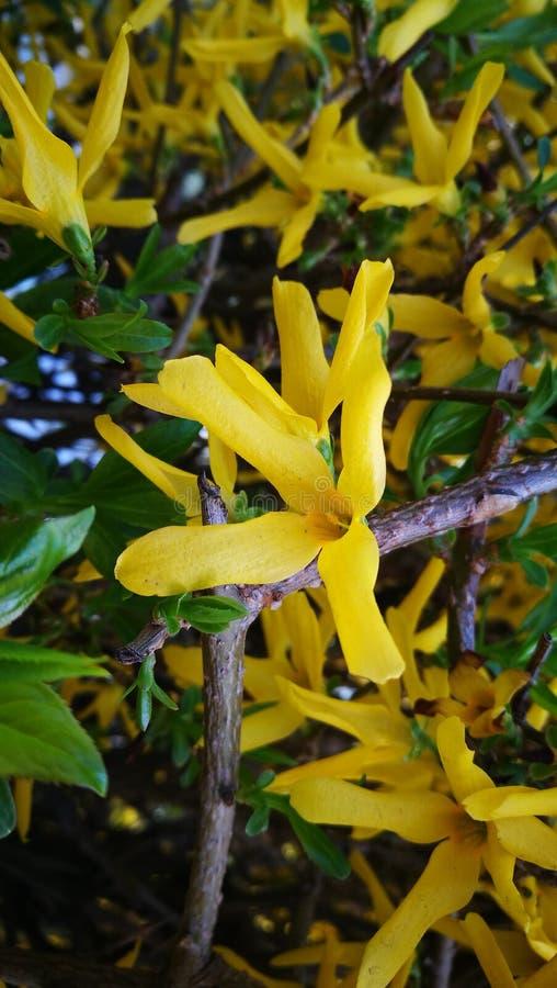 Beleza amarela imagens de stock