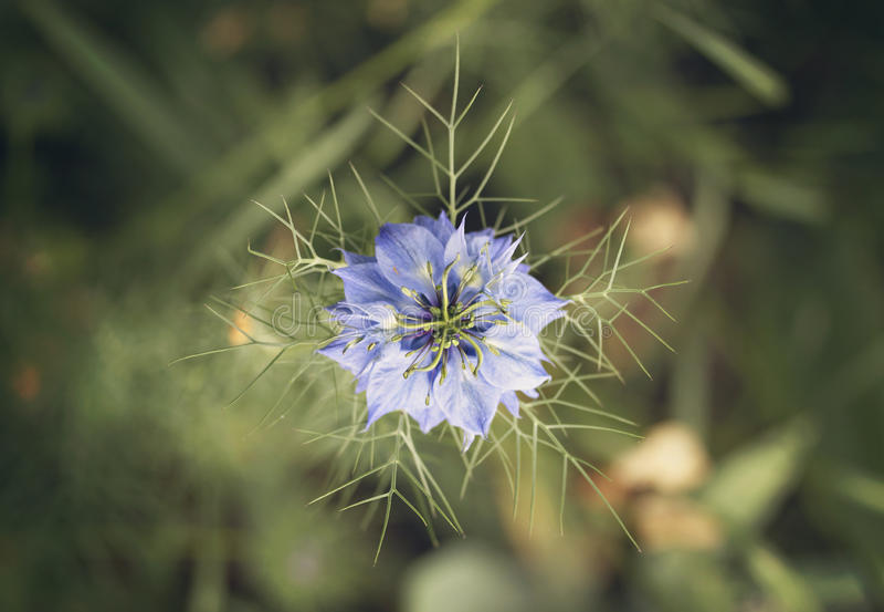 Beleza azul imagem de stock royalty free