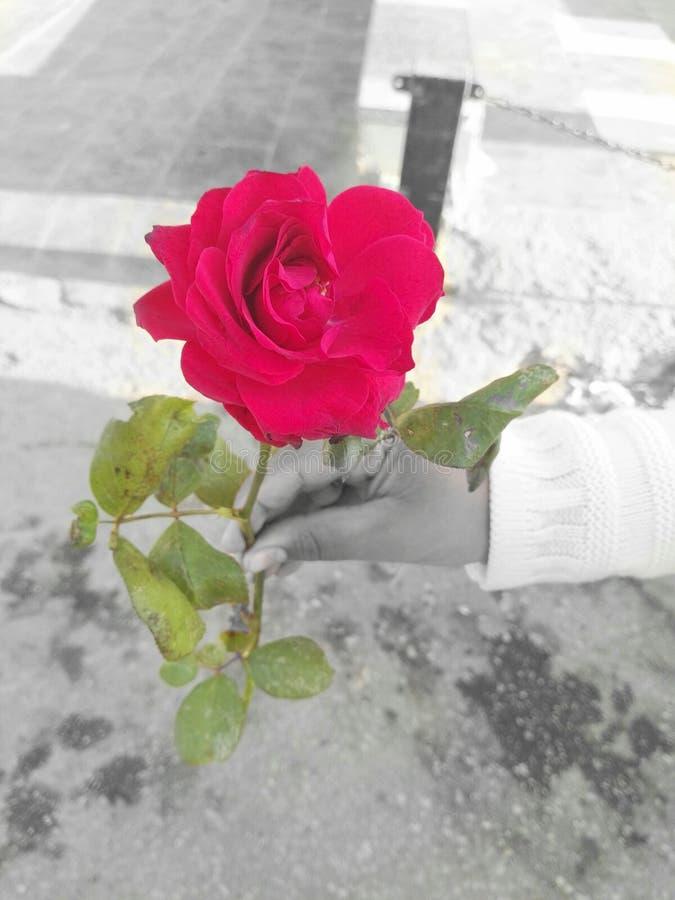 beleza cor-de-rosa da língua da natureza da vida imagens de stock