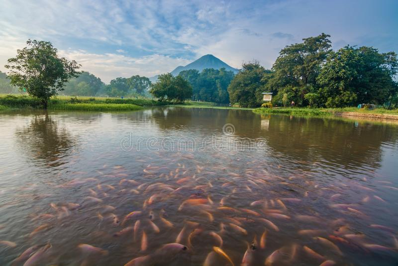 a beleza da água de mola, mojokerto, East Java, Indonésia imagens de stock