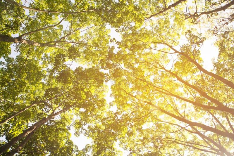 A beleza da árvore em uma outra vista foto de stock