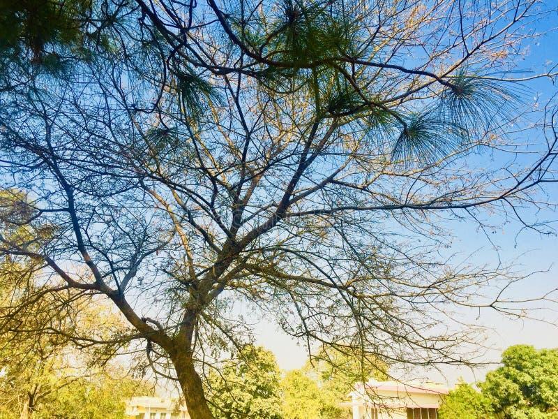 Beleza da árvore na estação do outono fotografia de stock royalty free