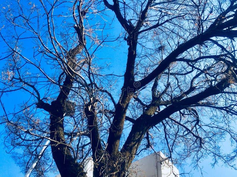 Beleza da árvore na estação do outono imagem de stock