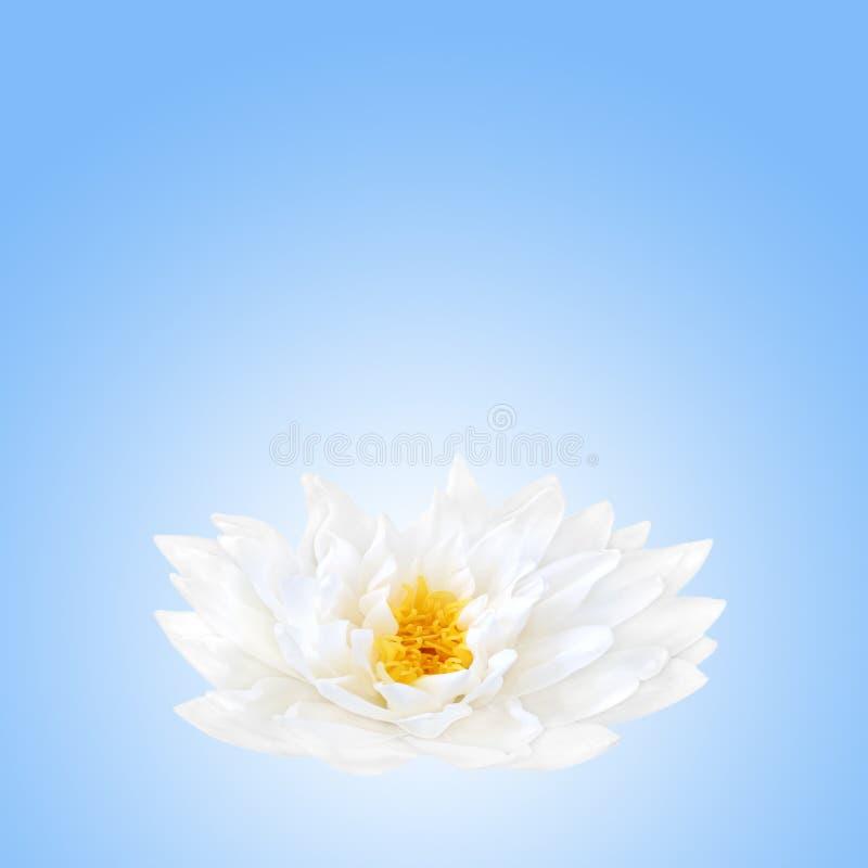 Beleza da flor dos lótus fotos de stock royalty free