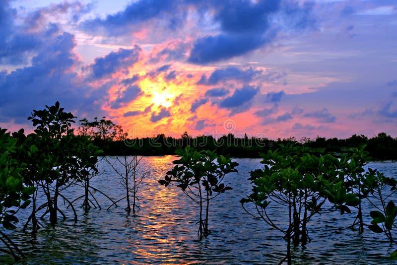 A beleza da natureza com por do sol 3 imagens de stock