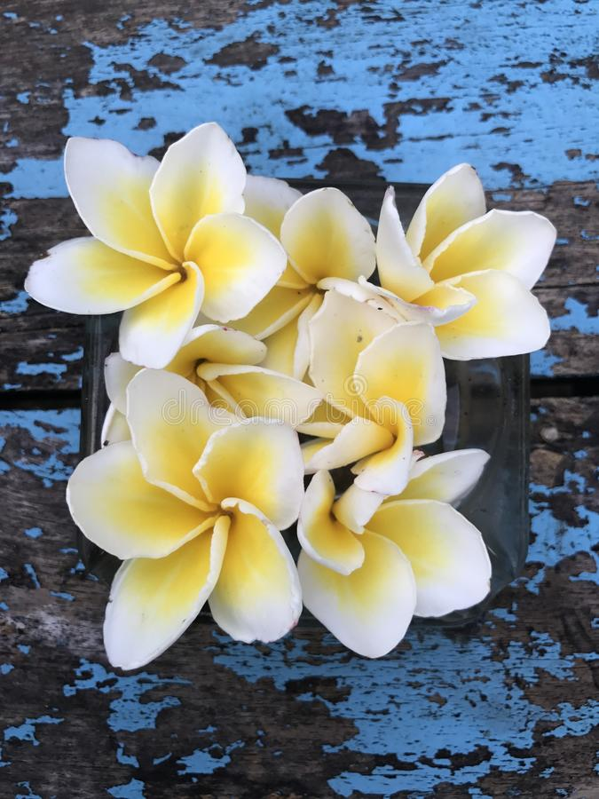 Beleza da natureza da flor fotos de stock royalty free