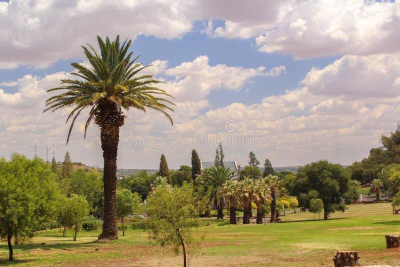 Beleza da natureza - parque bonito com palmeira e gramado foto de stock