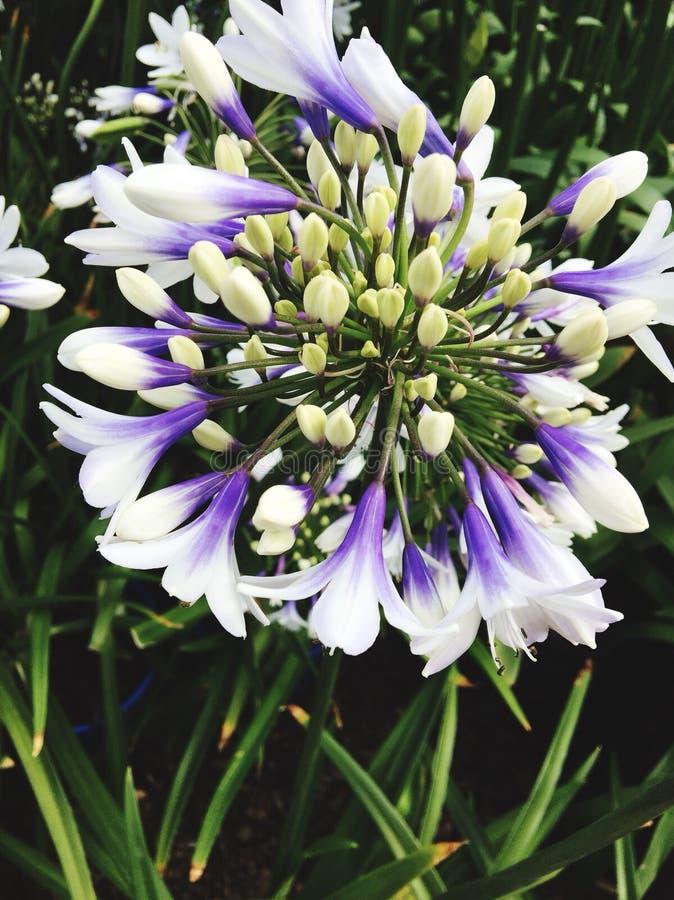 Beleza da planta imagem de stock