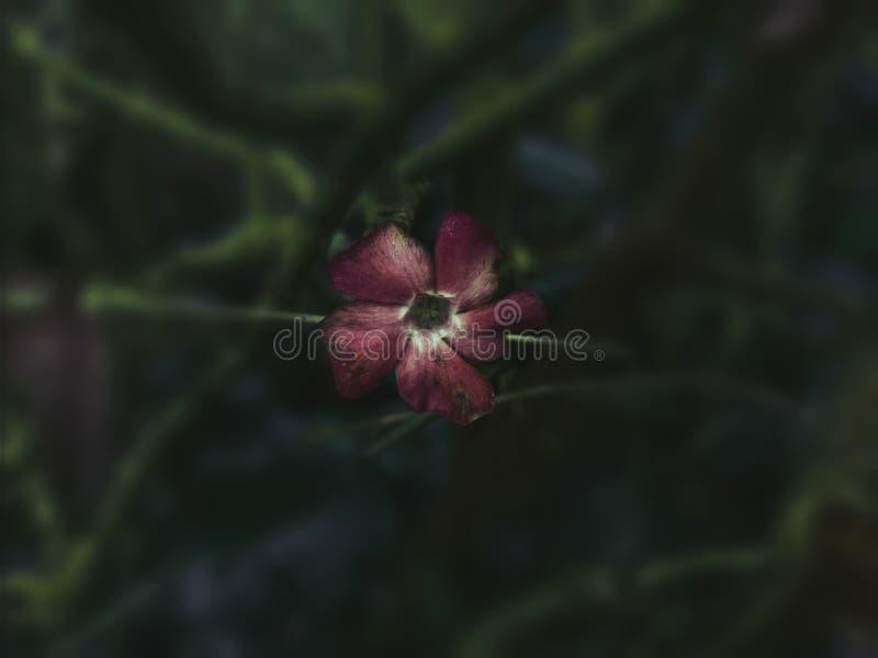 Beleza da selva fotografia de stock